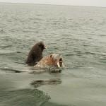 У берегов Чукотки можно увидеть и не такое